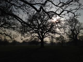 Tree at 4pm day 29