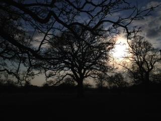 Tree at 4pm day 30