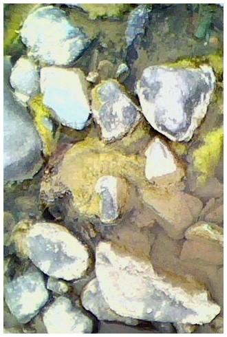 سنگ ها