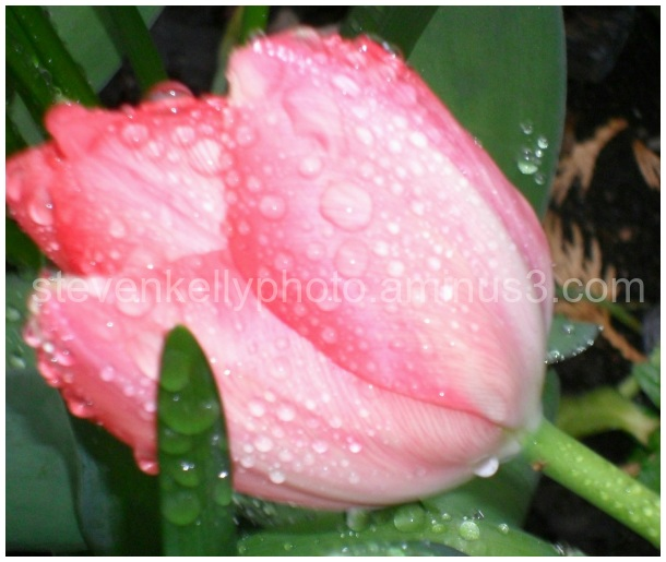 Plant with Raindrops