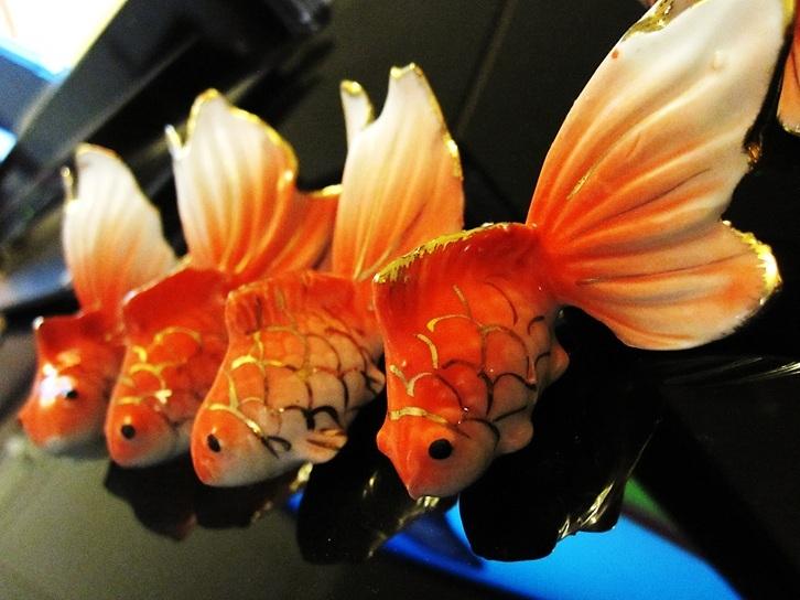 ماهی ها عاشق...نمی شوند