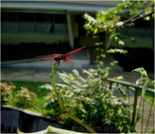 a dragon fly