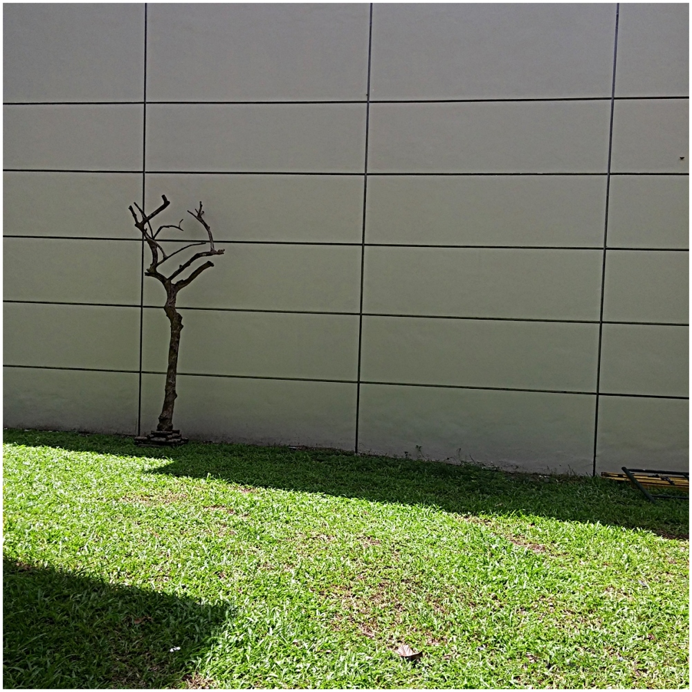 cementree