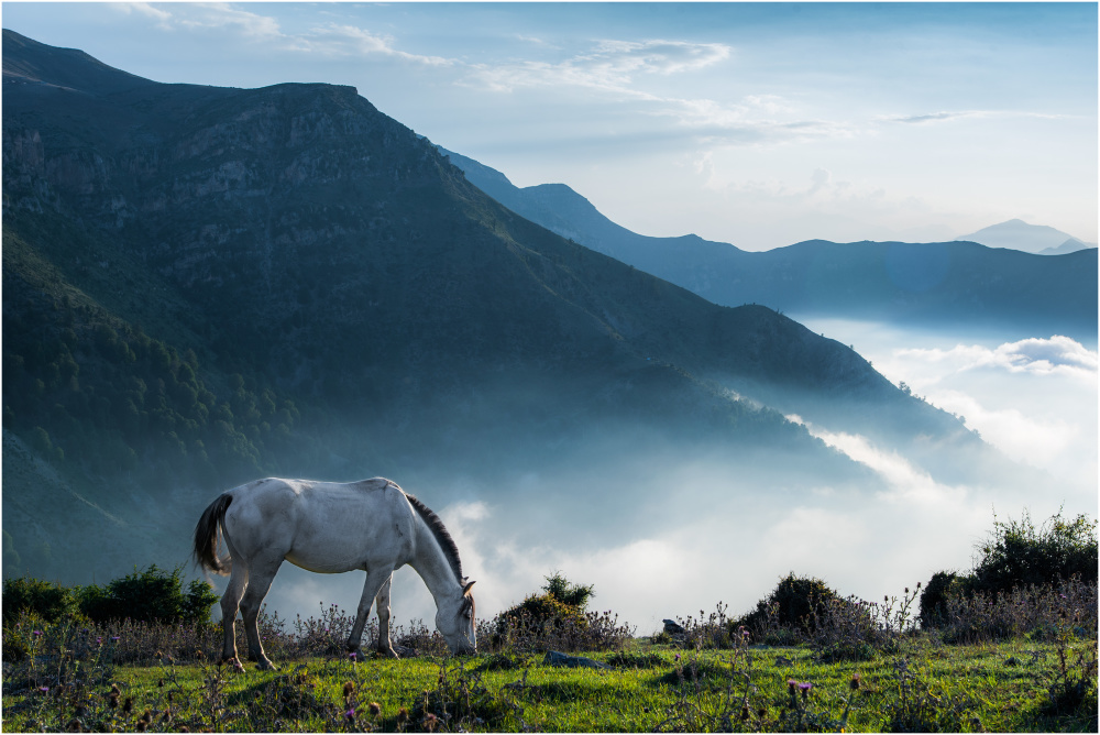 the cloud Ocean and horse ...