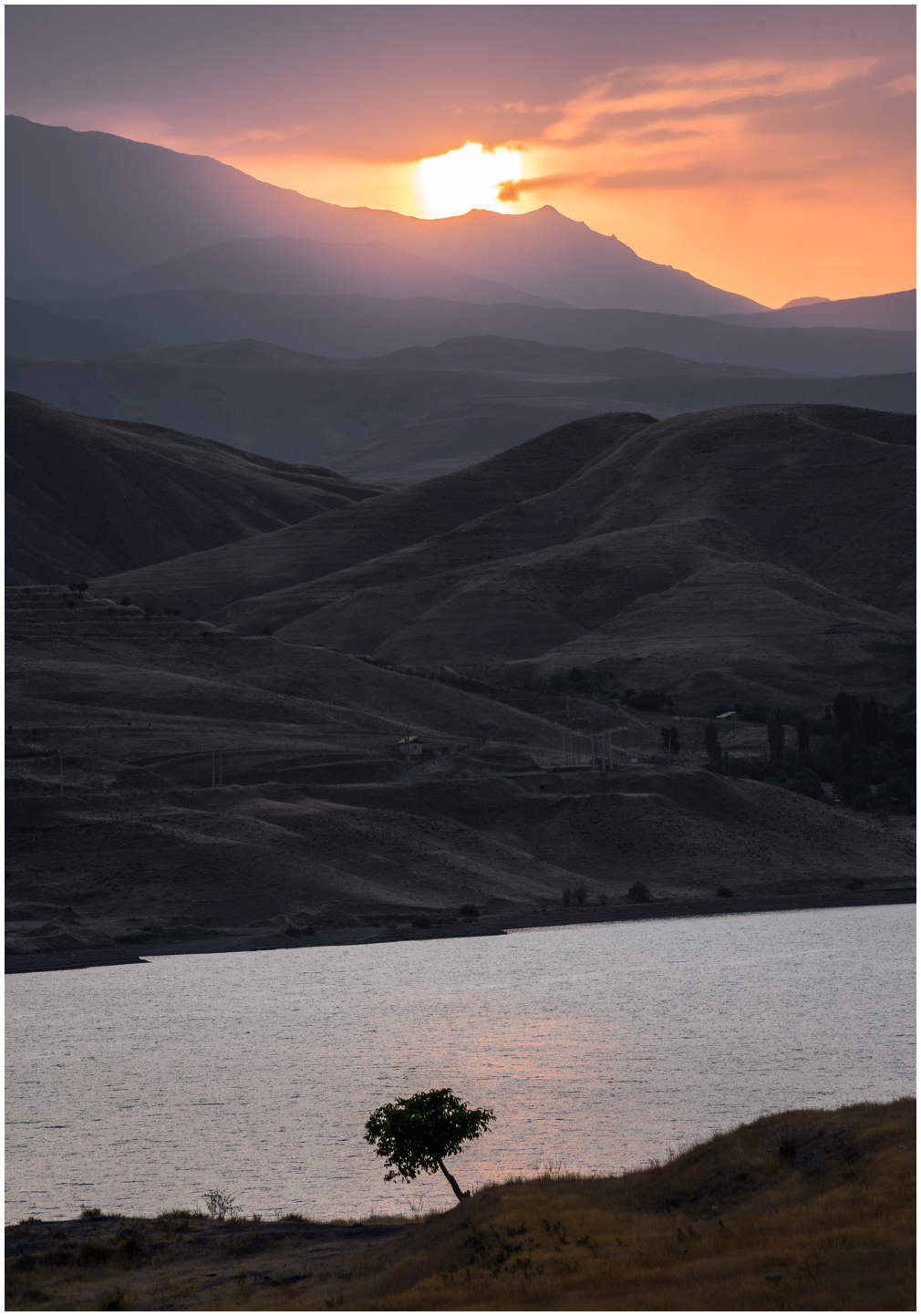 single_tree parviz_falahatkar Taleghan_dam iran
