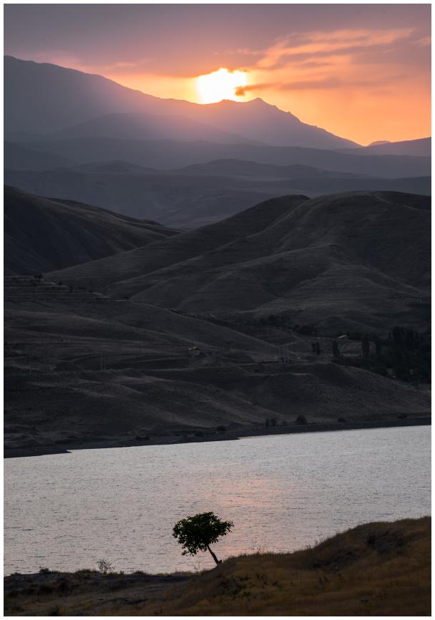 single_tree parviz_falahatkar Taleghan_dam iran