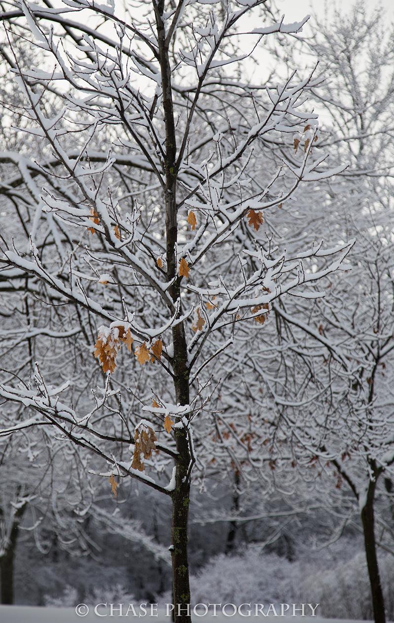 Winter Leaves.