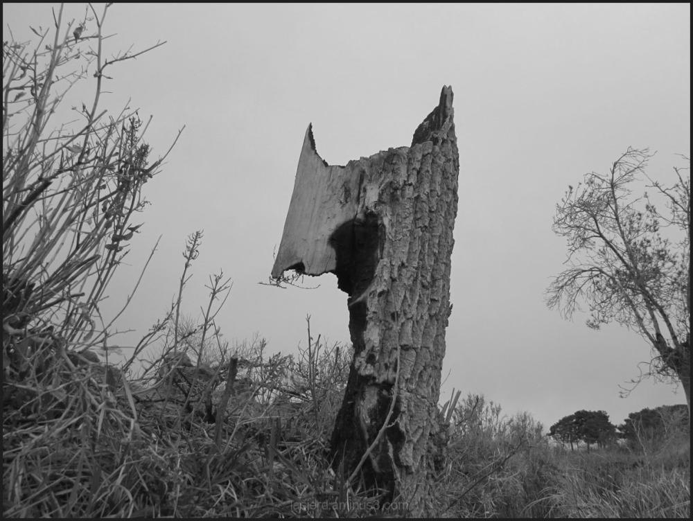 طبیعت روستای لاسجرد