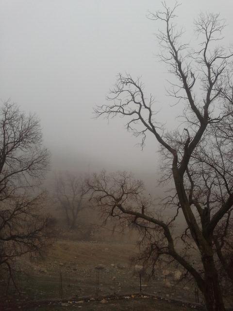 انتظار مه آلود