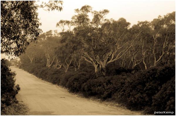 trees @ Mt Blackheath 4