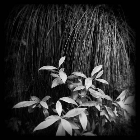 bushwalk 2