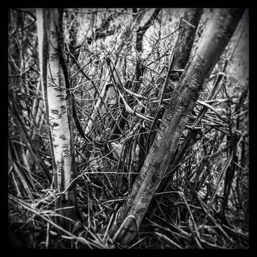 bushwalk 4