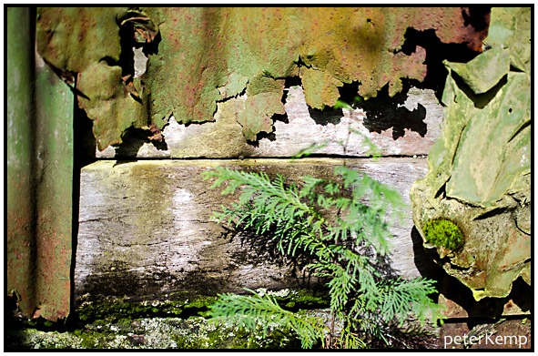 moss+decay [4]