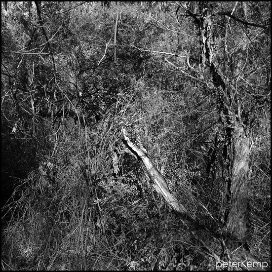 27.5 nine Glenbrook National Park