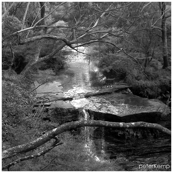 bushwalk blue mountains australia b+w