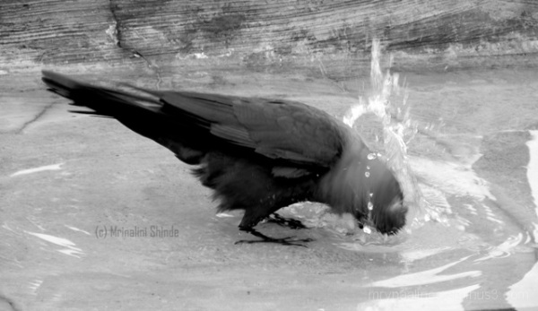 CrowBath.