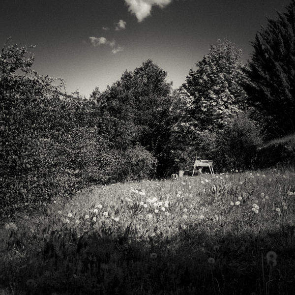 Hammock in landscape.