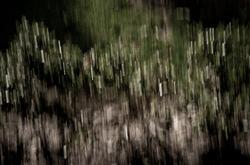 Blurred landscape.