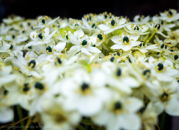 Green and white flowers.