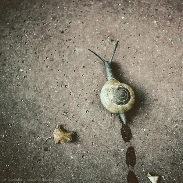 Snail on sidewalk.