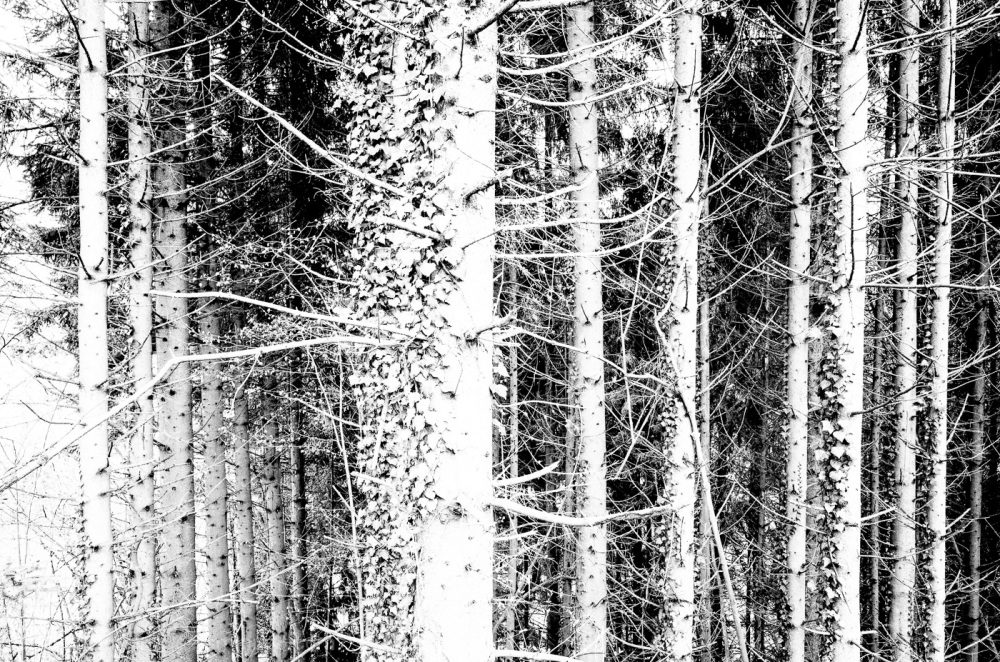 Black and white trees series.
