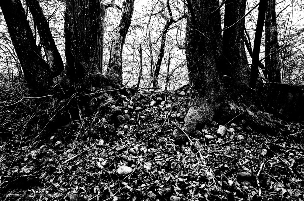 Trees and rocks in black and white.