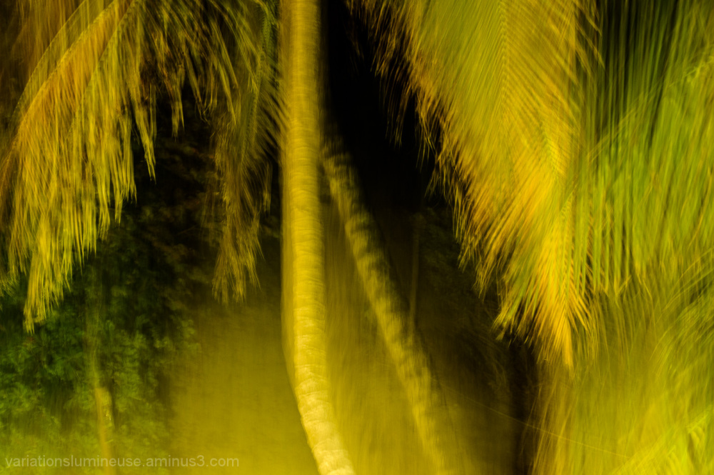Swaying palm trees at night.