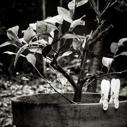 Garden in black and white.