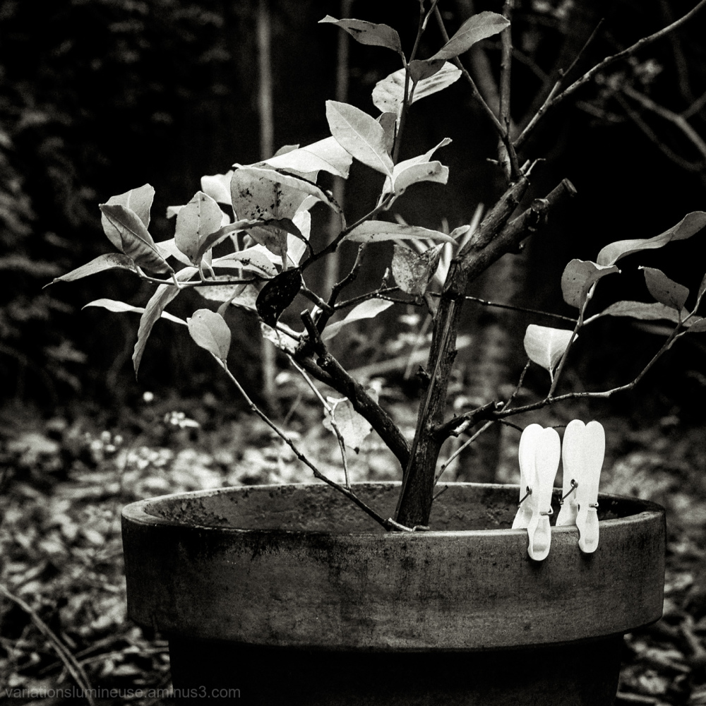 Garden in black and white.