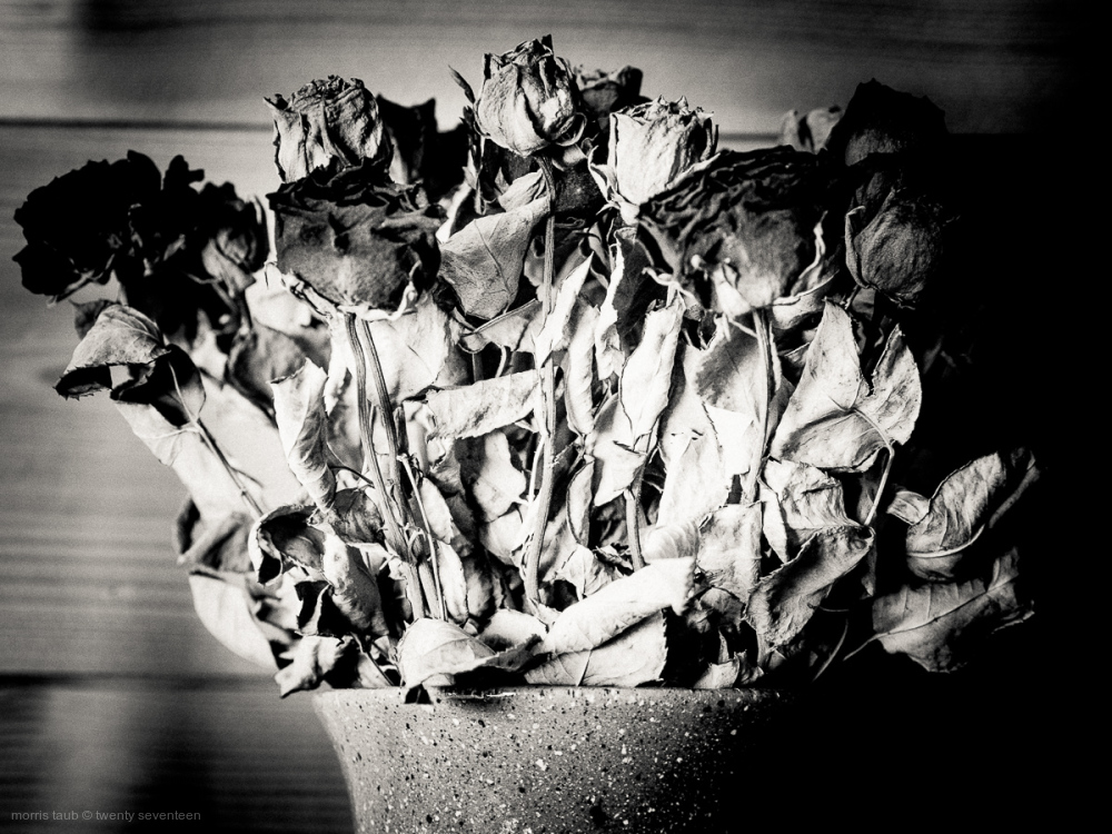 Dead flowers in black and white.