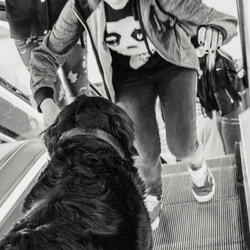 Dog afraid to descend escalator.