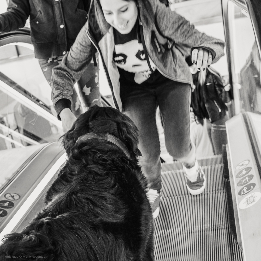 Dog afraid to descend escalator.