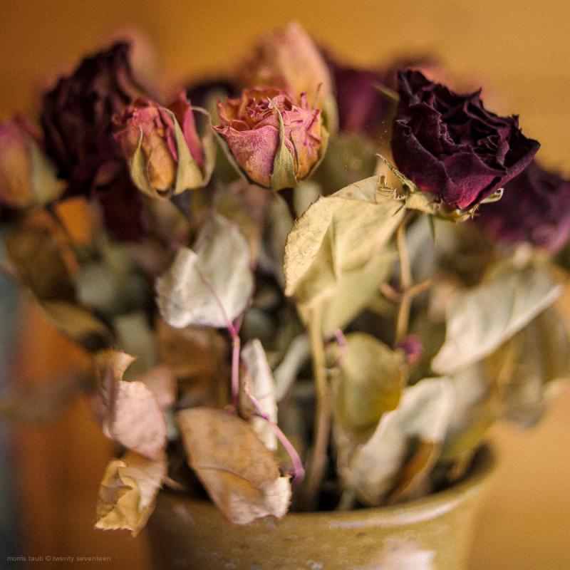 Dead flower still-life.