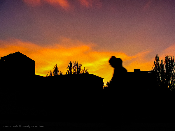 Evening stroll at sunset.