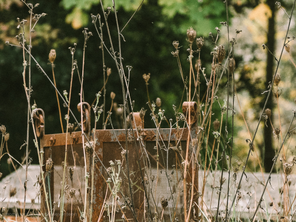 Chantal's garden.