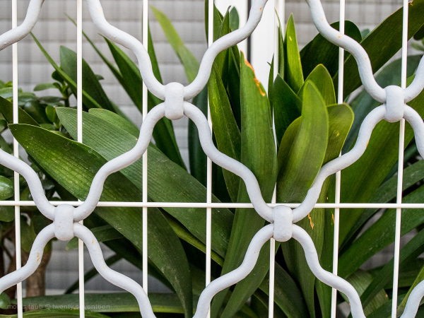 Plant trapped behind bars.