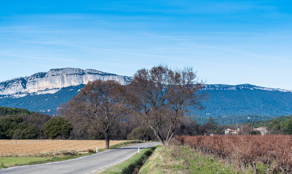 On the road to St. Mathieu in the Herault, France.