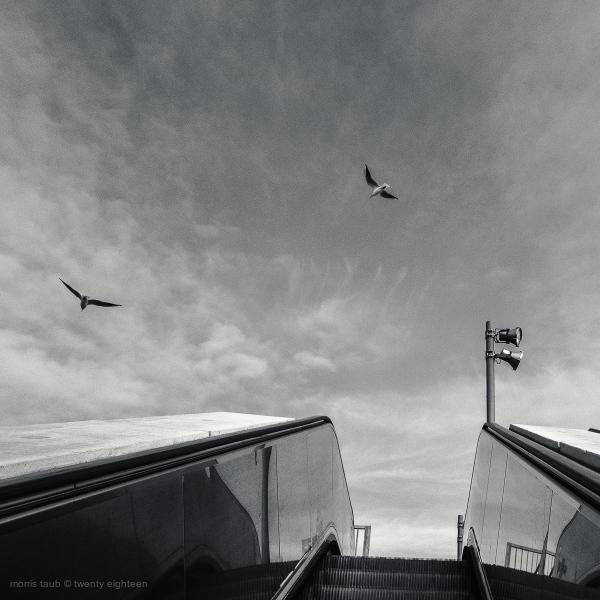 Two birds in flight.