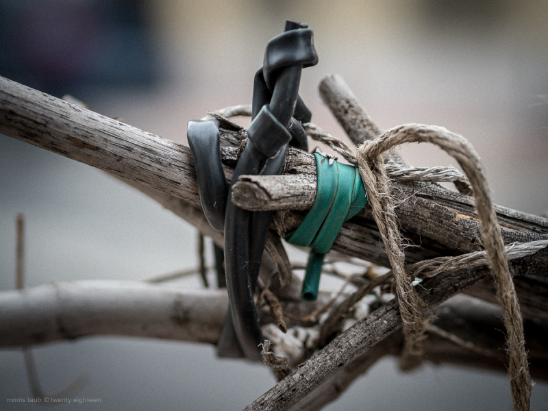 Branches tied with green and black rubber.