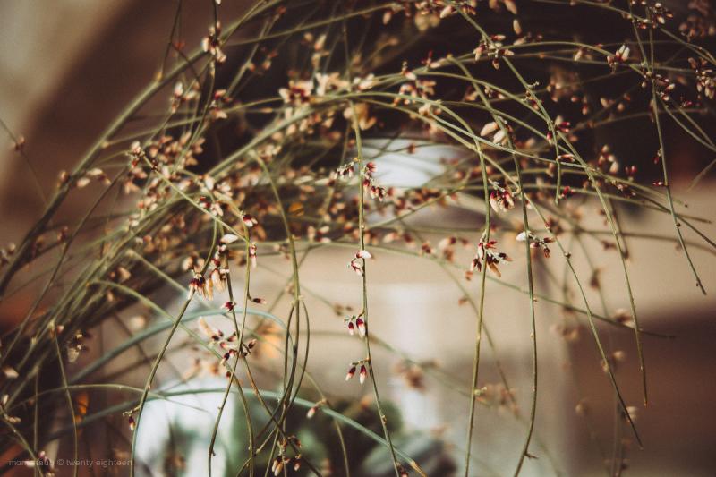 Plant on restaurant table.