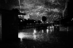 Miami Beach with palm trees