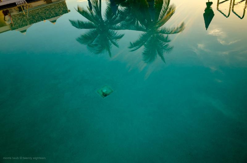 Pool reflection. Palm trees. Man. Cabanas.