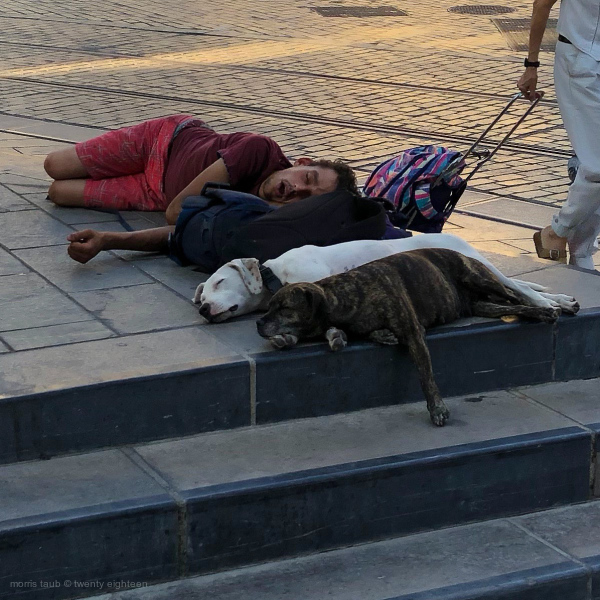 Two dogs sleeping on the street with owner.