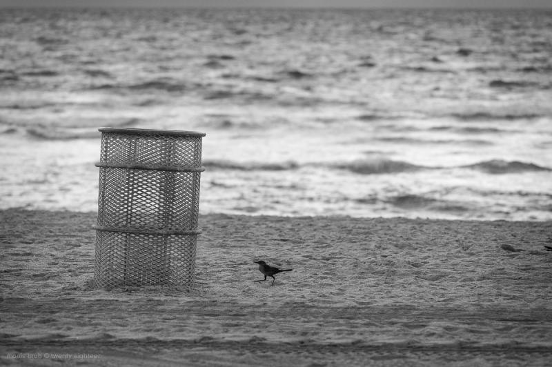 Bird near garbage can on Miami Beach in Florida.