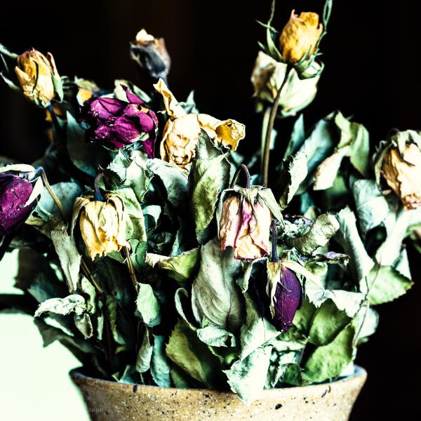 Dead flowers. Chantal's.