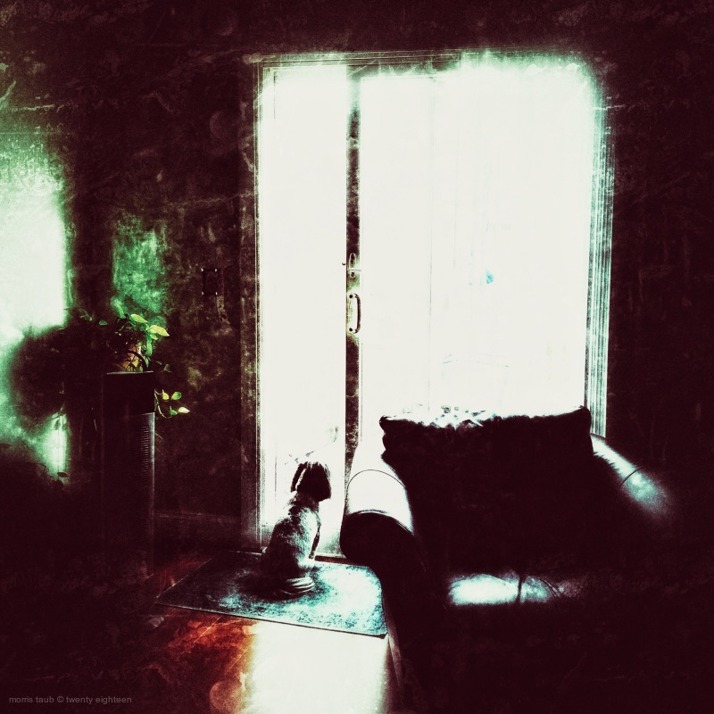 Dog looking out terrace window.