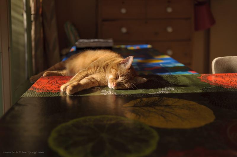Bambou, the orange cat sleeping in sunshine.
