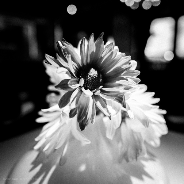 Table flowers. Miami Beach, Florida 2016.