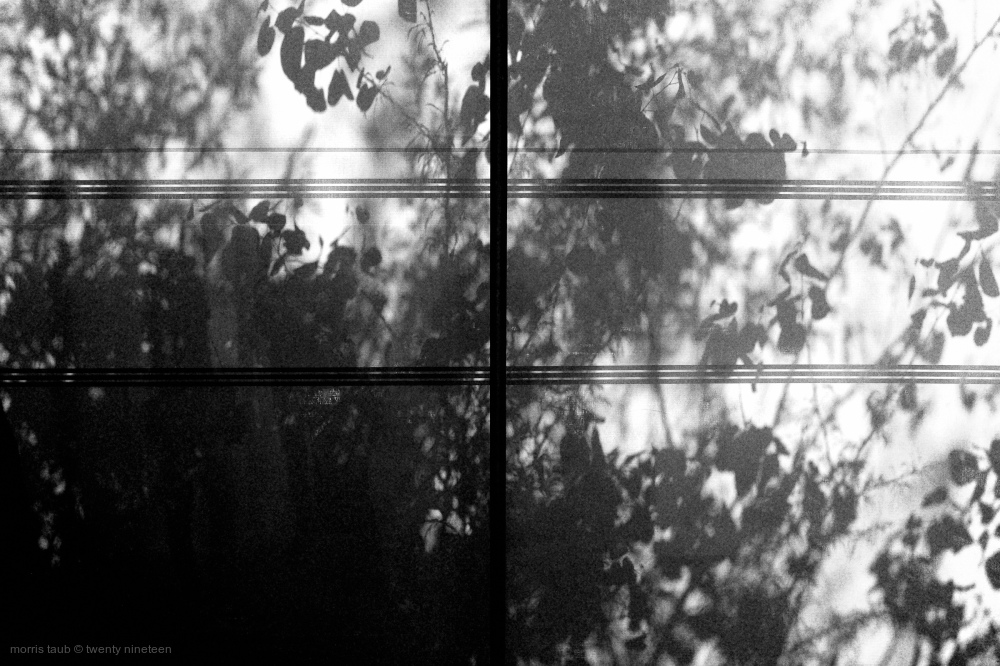 Tree shadow on window.