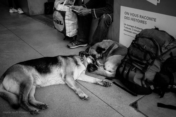 Two dogs sleeping at feet of their homeless master